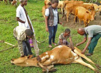 Nigerians On High Alert As Anthrax Hits Niger Republic