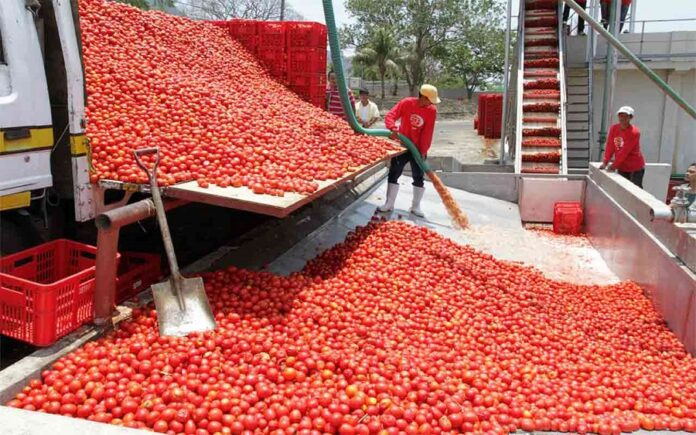 Dangote Demands Total Ban On The Importation Of Tomato Into Nigeria